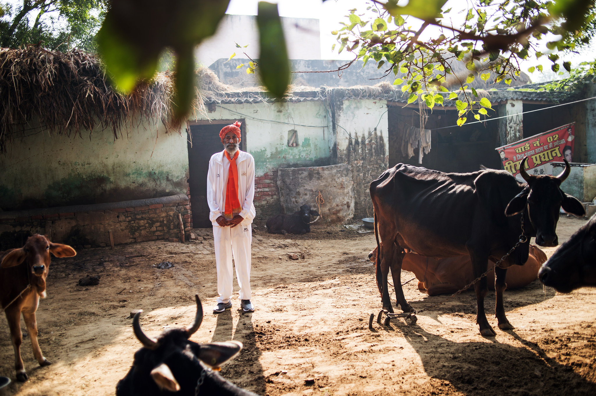 Singh, who is a herder, with his livestock at his home in Gudha. Photo: New York Times